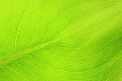 Free Leaf Details Stock Images - 13278404