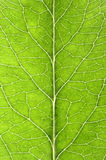 Leaf details Royalty Free Stock Image