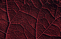 Leaf details Royalty Free Stock Photo