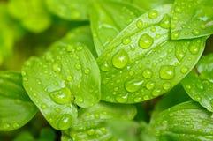 Leaf with dew Stock Photos
