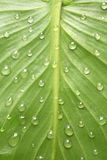 leaf with dew drop design Stock Images