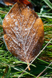 Leaf with dew months Stock Images