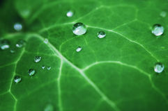 Leaf with dewdrops Stock Image