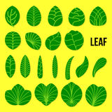 LEAF. Different green leaves are shaped with organic form in green colour and embroiled with vein pattern Royalty Free Stock Image