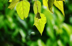 Leaf with different shapes Stock Photography
