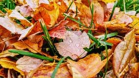 Leaf, Dish, Food, Autumn Royalty Free Stock Photo
