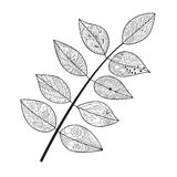 Leaf doodle. Vector illustration. Hand drawn artwork. Black, white. Coloring book page for adults stock illustration