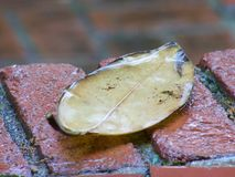 Leaf on the doorstep Royalty Free Stock Images