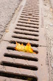 Leaf in drain Royalty Free Stock Photos