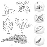 Leaf Drawing Set Royalty Free Stock Photos