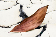 Leaf in dried mud Stock Photos