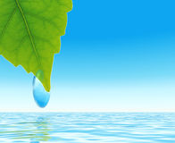 Leaf with the drop. Brightly green leaf with the drop of dew on a background blue waters Stock Image