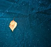 Leaf drop. Autumn rain bacjground Royalty Free Stock Photos