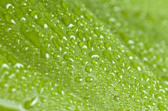 Leaf with drop macro. In forest royalty free stock image