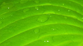 Leaf with a drop of water close up Royalty Free Stock Photography