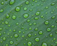 Leaf droplet. Close up image of leaf with rain drops Stock Image