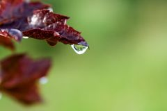 Leaf with droplet Stock Photo