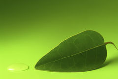 Leaf and Droplet Stock Image
