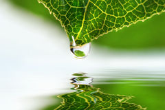 Leaf droplet over water royalty free stock photo