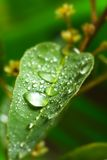 Leaf with droplets Stock Photos