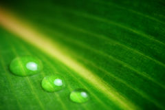 Leaf and droplets Stock Photos