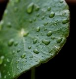 Leaf with droplets. Stock Photos