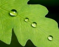 Leaf Droplets Stock Image