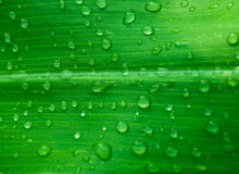 Leaf with drops. Green leaf after rain with drops Stock Image