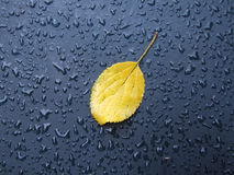 Leaf and drops. Yellow leaf and drops on the dark blue waterproof material Stock Photo