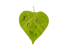 Leaf and drops Royalty Free Stock Photography