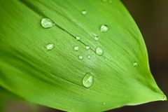 Leaf with drops of water Stock Images
