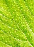 Leaf with drops of water Stock Photo