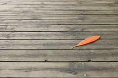 Leaf dry on the floor wood. Detail of leaf dry on the floor wood Royalty Free Stock Photo