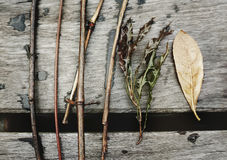 Leaf Ecology Environment Foliage Fresh Growth Concept Stock Photo