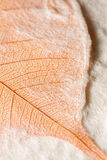 Leaf embedded in handmade paper Royalty Free Stock Image