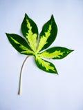 leaf en Royaltyfria Foton
