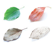 Leaf evolution Stock Images