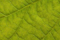Leaf extreme close up Royalty Free Stock Photos