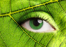 Leaf eye. Green leaf looking at you Royalty Free Stock Images