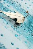 leaf för 2 liten droppe Royaltyfri Bild