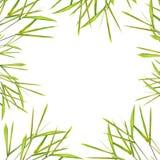 leaf för bambukantgräs royaltyfria foton