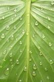 leaf för designdaggdroppe Arkivbilder