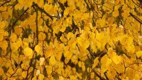 leaf för fall för konsthöstbakgrund digital I parkera vänder alla sidor gult och nedgången under vindkasten av vind lager videofilmer