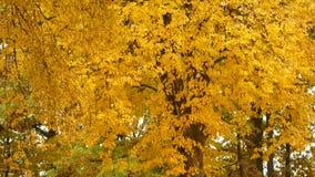 leaf för fall för konsthöstbakgrund digital I parkera vänder alla sidor gult och nedgången under vindkasten av vind stock video