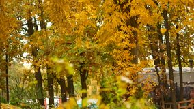 leaf för fall för konsthöstbakgrund digital I parkera vänder alla sidor gult och nedgången under vindkasten av vind arkivfilmer