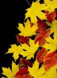 leaf för höstbakgrundsblack Arkivbilder