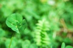 leaf för växt av släkten Trifolium fyra royaltyfri foto