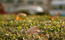 Leaf in fall Stock Image