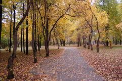 Leaf fall. Autumn,  leaf fall in a Park Royalty Free Stock Photo