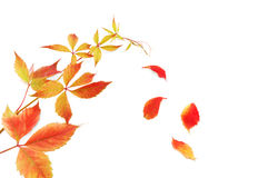 Leaf fall Stock Photography